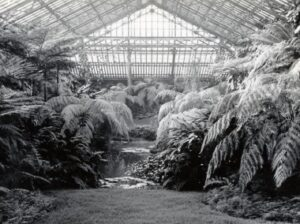 historical photo of fern room
