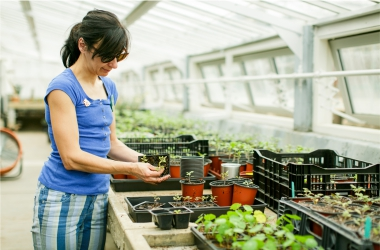 Mini Plant Sale Greenhouse Photo