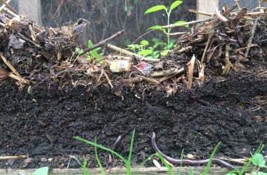 Compost side view
