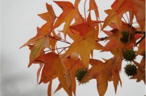 Fall Tree ID Walk