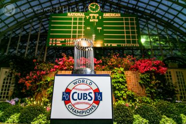 cubs' trophy in show house