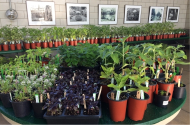 Seedling Sale 2017