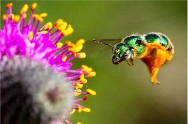 Native Pollinator Lecture