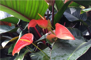 Indoor Plants for Health Class