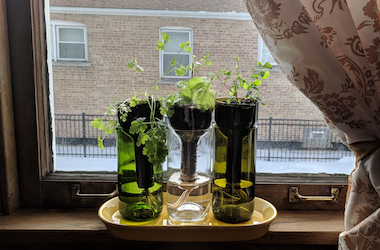 DIY Windowsill Herb Garden Class