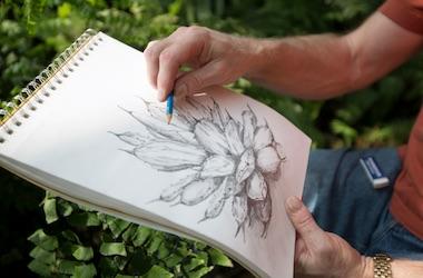 Botanical Drawing Senior Series