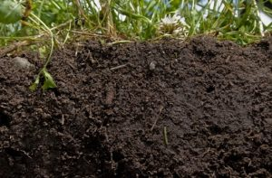 Soil Health