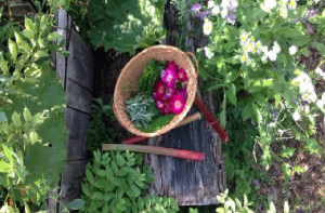 A basket of freshly foraged foods & herbs - from our presenter, Nina!
