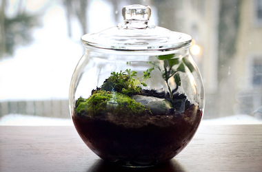 Side View of Closed Terrarium