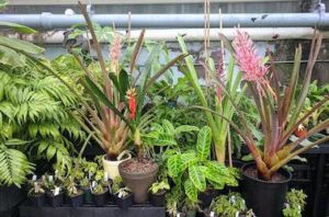 Plants for the pop up sale