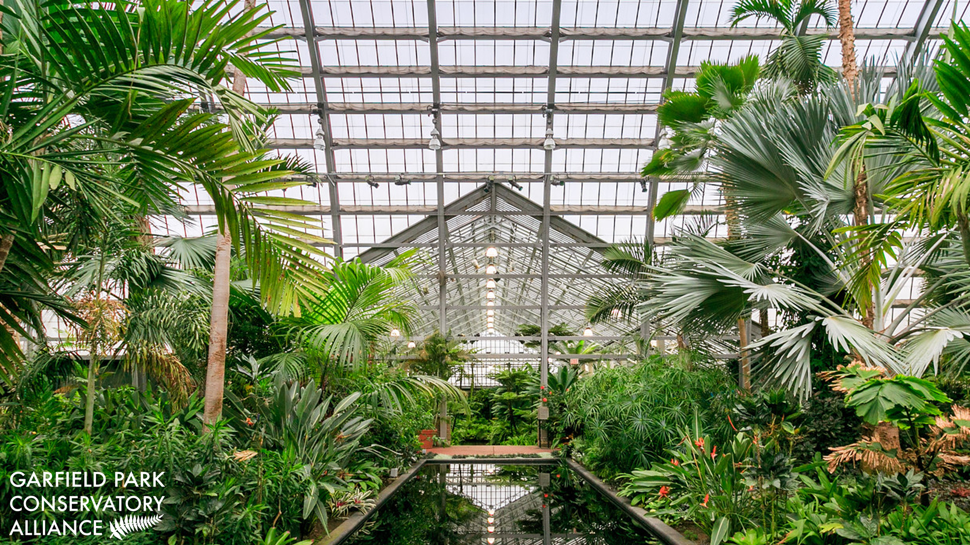Palm House view of the reflecting pool with Fern Room in the background. Tall glass ceilings with lots of palms surrounding the center pool.