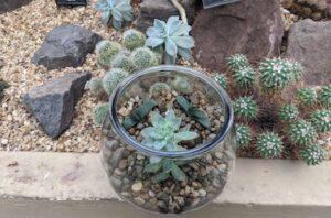 DIY Open Terrarium with Hardy Succulents-Virtual Class