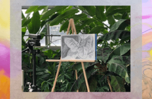 Drawing Desert Plants; A Virtual Senior Series