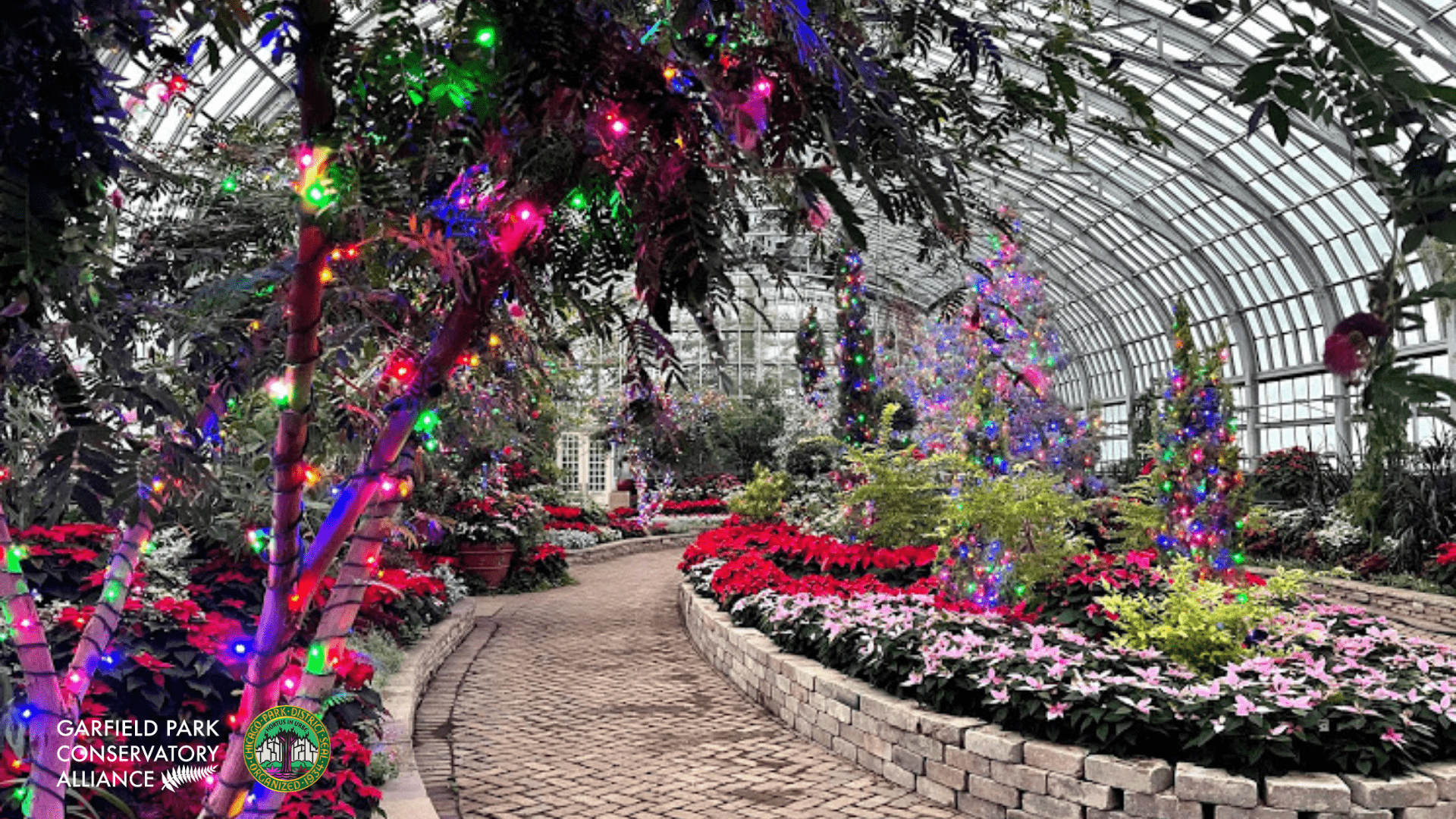 Tree wrapped in colorful twinkle lights with the winter flower show filled with poinsettias and greenery in the background