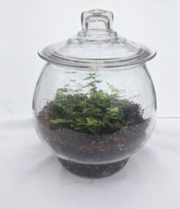 Small plants in a clear glass jar with a lid