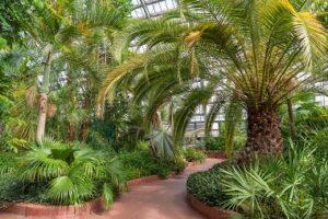 Virtual Tour: Palm House