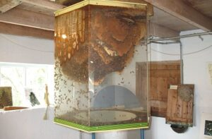 An observation beehive hangs inside a room.