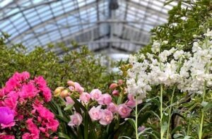 Pink and white flowers with greenery and glass ceiling in the background.