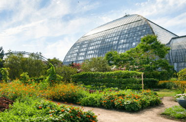 a photo of the outside of the conservatory. Many green plants and orange flowers.
