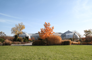 Photo of the outdoors at Garfield Park Conservatory. The season is fall. There are trees and bushes in the background. The leaves on the trees are yellow and golden. There is grass in the foreground. It is a sunny day and the sky is blue.